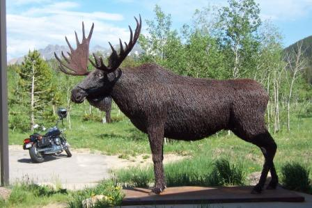 Barbed Wire Moose