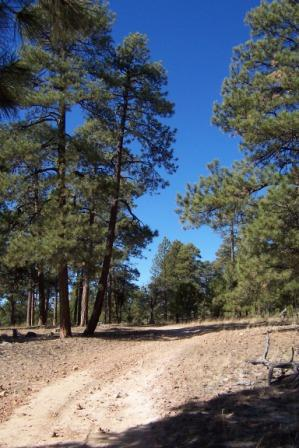 another Mogollon Rim scene
