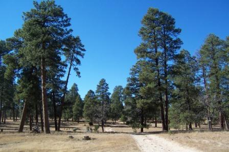 our last Mogollon Rim country view