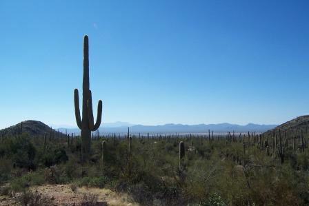Saguaro National Park view