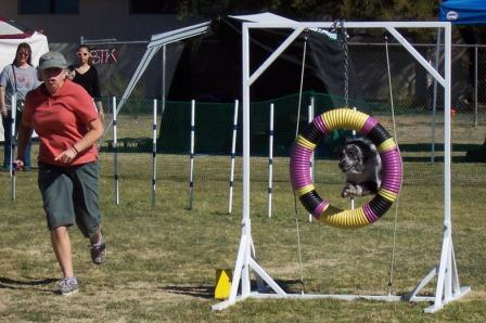 Dog Agility Tire with Buck