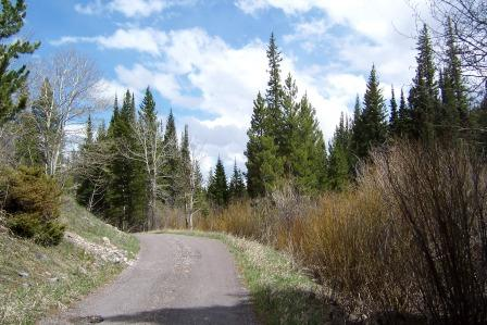 Road in Willow Creek Campground