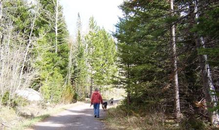 Walking the dogs on the Medicine Bow National Forest
