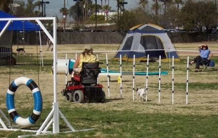 Running Dog Agility in a Wheel Chair .... Awsome!