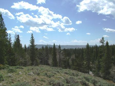 The Medicine Bow National Forest again!