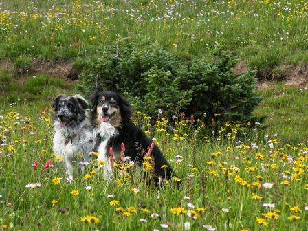 Lily and Buck in High Uinta Flowers
