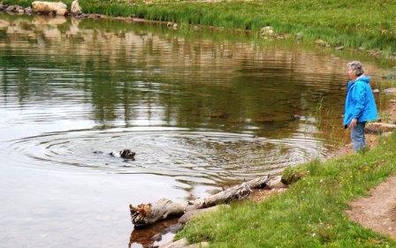 Buck Swimming in Lofty Lake