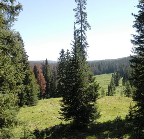 Routt National Forest View