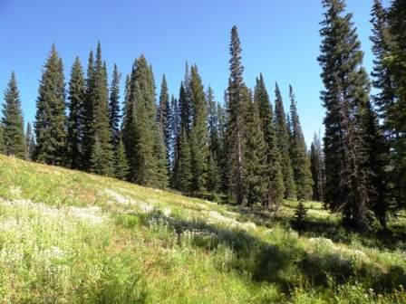 View near Meadows Campground in Routt National Forest