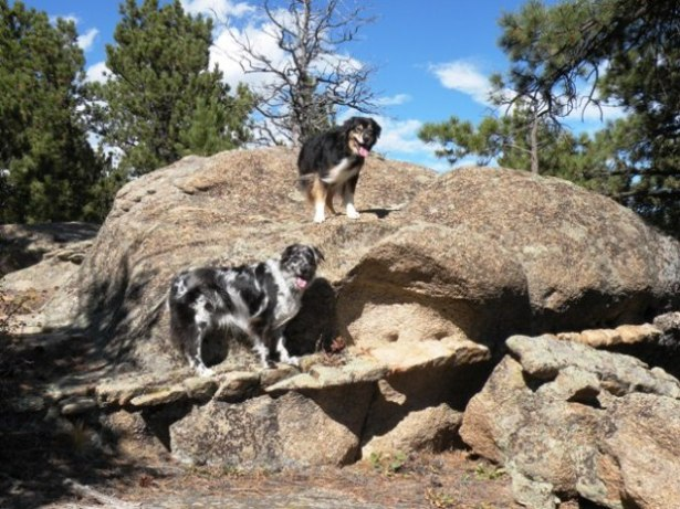 Lily and Buck on Red Feather rocks