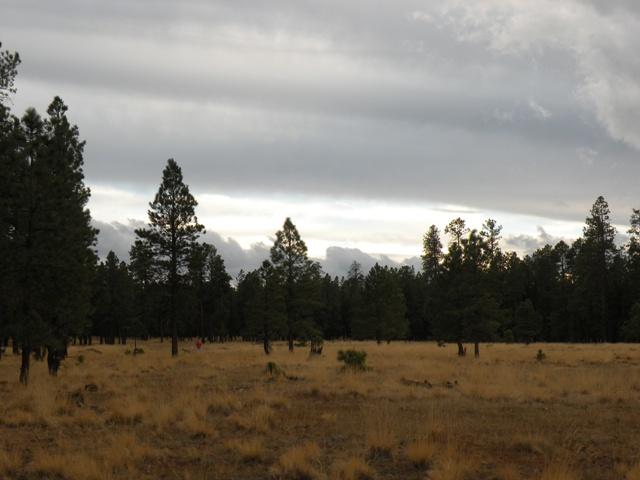 meadow for an RV Boondocking back yard