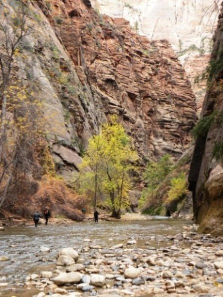 Hikers in Virgin River in Zion