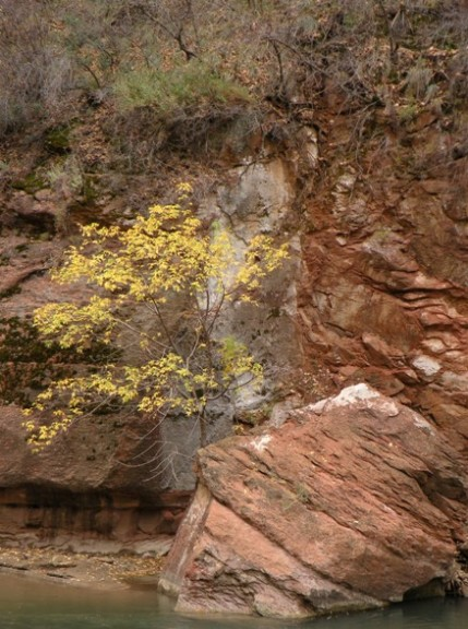 along the Virgin River in Zion