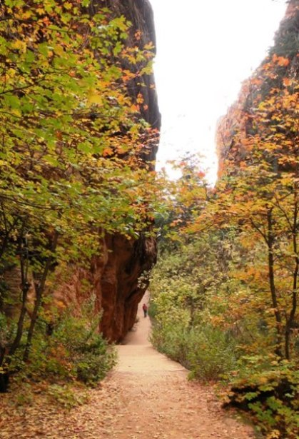through a narrow canyon in Zion