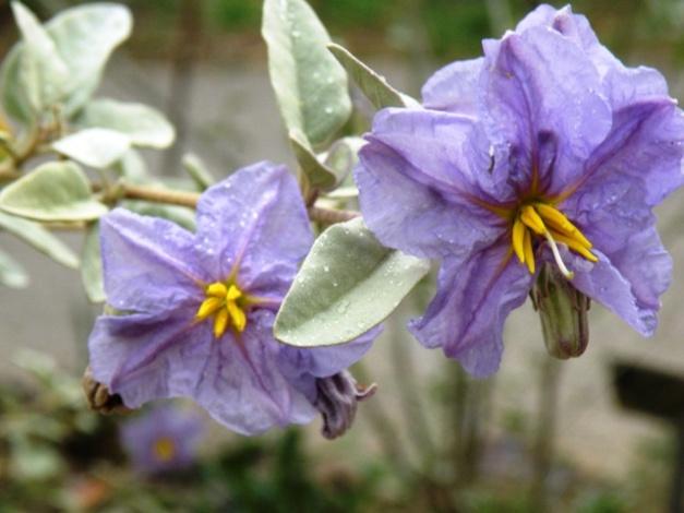 Arizona-Sonora Desert Museum Flowers