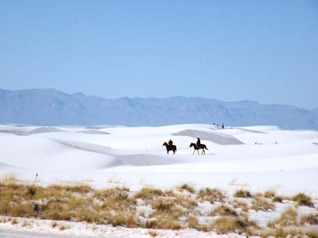 Horses in White Sands National Monument