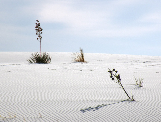 Hard life in White Sands National Monument