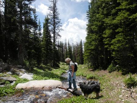 Log crossing on Tipple Trail in the Snowy Range of Wyoming