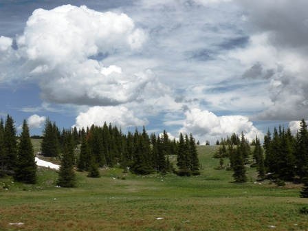 High Meadow in the Snowy Range of Wyoming