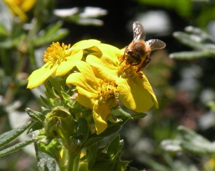 Bee at Denver Zoo