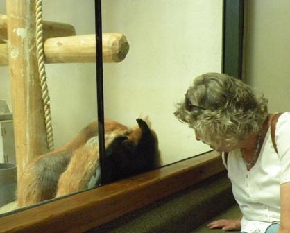 Heidi watching Orangatan watching her at Denver Zoo