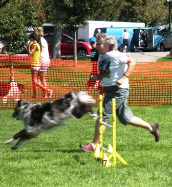 Running a Dog Agility Course