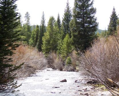 Libby Creek on the Medicine Bow National Forest