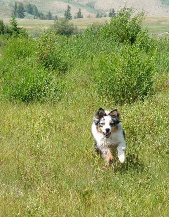 Jed along the Gros Ventre River