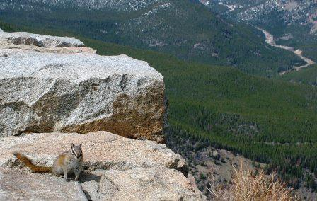 Alvin the Rocky Mountain National Park Squirrel