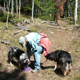Dog water when hiking
