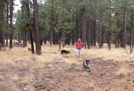 Dogs running in RV Boondocking Camp