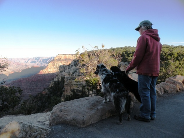 Dogs Looking at the Grand Canyon