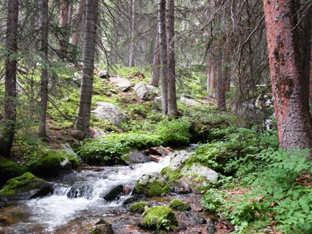 A Deep woods creek by Red Feather Lakes Colorado