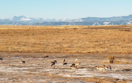 Antelope in Nunn Colorado